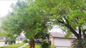 tree trimming houston tx gomez tree service houston free