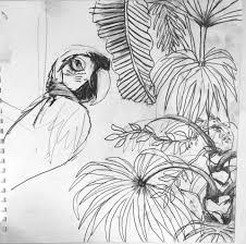 original pencil drawings sketches of birds tropical flowers