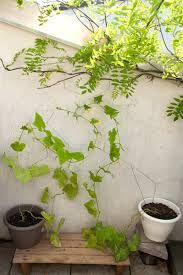 houseplant trellis diy coat hanger trellis
