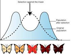 evolution types of natural selection pathwayz