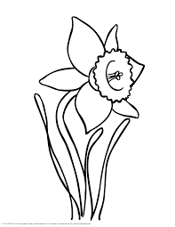 daffodil coloring pages printable images kids aim