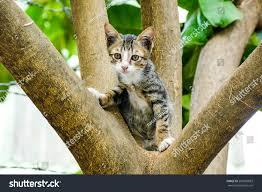 stray kitten climbing trees playing happily stock photo 587889893