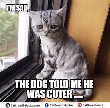 Sad Cat Memes - sad cat memes photos funny cute angry grumpy cats memes