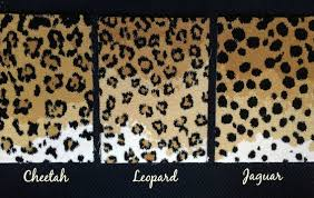 Leopard Print Runner Rug One Room Challenge Week 2 Leopard Carpet Challenge Week