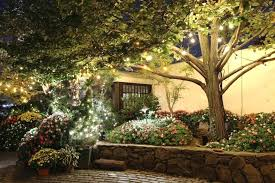 Landscape Lighting Ideas Trees Marvelous Landscape Lighting Ideas Ideas For Landscape Lighting