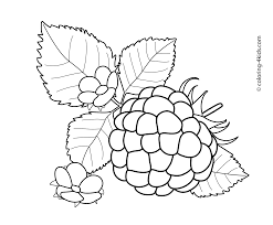 raspberry with flowers fruits and berries coloring pages for kids