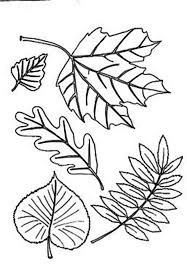 different type of autumn leaf coloring page download u0026 print