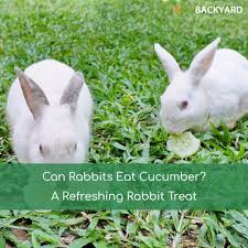 can rabbits eat cucumber a refreshing rabbit treat oct 2017