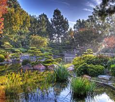 beautiful plants miscellaneous beautiful plants stones flowers nature forest water