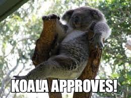 Koala Bear Meme - resultado de imagen de evil koala meme koalitas pinterest