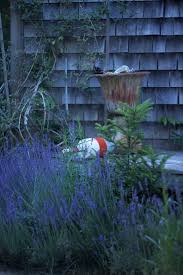 cape cod native plants secret garden at home with marnie on cape cod gardenista