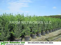 native plant nursery fort myers palm beach nursery 786 255 2832 we deliver plant nurseries