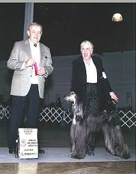 afghan hound arizona upcoming stars