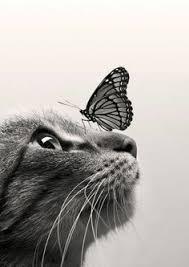 les 25 meilleures idées de la catégorie dessin papillon sur