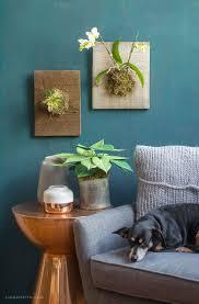 Inside Plants by 77 Best My Succulents Images On Pinterest Succulent Plants