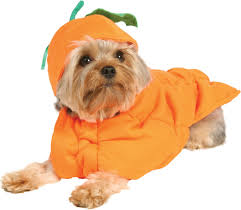 Halloween Costumes For Dogs Halloween Halloween Perfects For Dogs In Wheelchairs And Owners