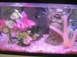 pink aquarium fish 1000 aquarium ideas 1000 aquarium ideas