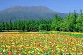 autumn flowers scenery that draws you in zekkei s best 5 autumn flowers zekkei