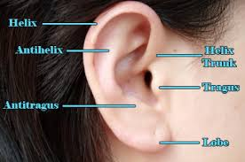 helix earing how to care for a helix or forward helix piercing tatring