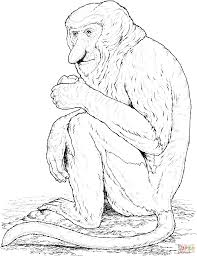 proboscis monkey coloring page free printable coloring pages