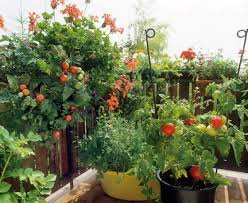 gem se pflanzen balkon gemüse und obst auf dem balkon anpflanzen qualcosadirosa