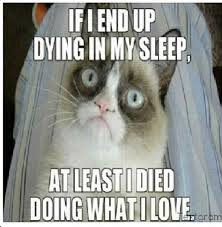 Grumpy Cat Sleep Meme - th id oip 4pjgk3ut6uxeame t rb7ghahj