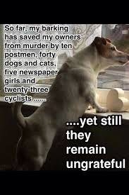 Russell Meme - 12 best jack russell memes of all time