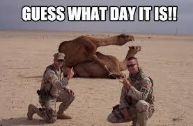 Camel Memes - hump day