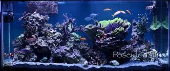 Reef Aquascape Designs Updated New Fts And New Aquascape Reef Central Online Community