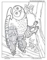 crawly creepers bookone coloring pages animal coloring pages