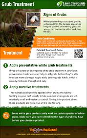 how to get rid of grubs in lawn grub control u0026 treatment