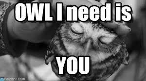 I Love U Meme - owl i need is you owl i need is on memegen