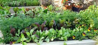 crop rotation for growing vegetables