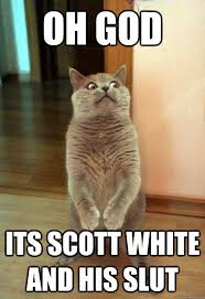 White Cat Meme - oh god its scott white cat meme cat planet cat planet