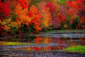 Foliage Map Fall Foliage Planning Guide Road Trips With Tom