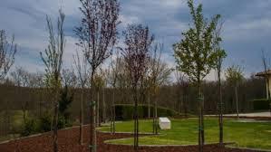 i giardini di marzo battisti testo grazie a mati 1909 diventano una realtã â i giardini di marzoâ di