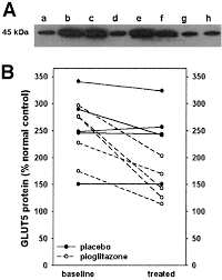 overexpression of glut5 in diabetic muscle is reversed by