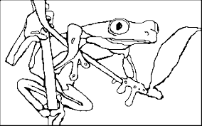 coloring book red eyed tree frog
