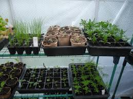what to do in the kitchen garden in may not just greenfingers