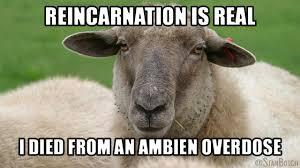Sleepy Meme - 23 funny sheep memes botch
