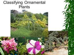 classifying ornamental plants ppt
