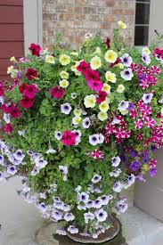 pretty planters 20 of them petunias planters and gardens