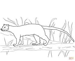 fossa from madagascar coloring page free printable coloring pages