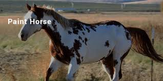14 most expensive priced horse breeds list successstory