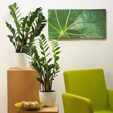 grünpflanzen im schlafzimmer grünpflanzen im schlafzimmer 57 images grünpflanzen