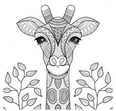 Giraffe Coloring Pages Coloring Amazing Coloring Pages Giraffe Giraffe Coloring Pages by Giraffe Coloring Pages