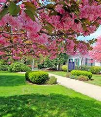 flowering tree packages for sale lowest prices