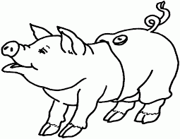 pig color sheet coloring