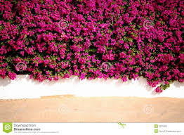 wall flowers flowers wall sand royalty free stock images image 3231929