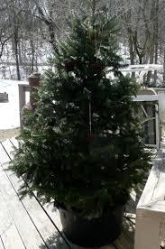 christmas tree mulch christmas lights decoration